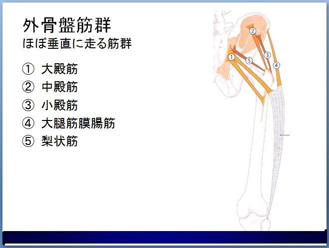 外骨盤筋群 大殿筋や中殿筋など垂直に走る殿部の筋群