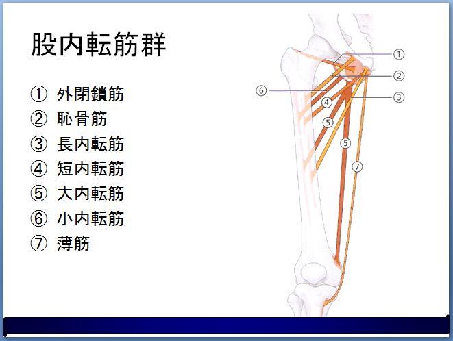 股関節の内転筋群