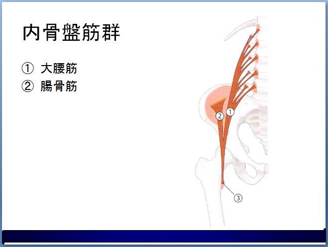 内骨盤筋群 大腰筋 腸骨筋