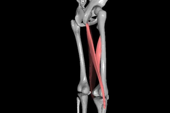 大腿二頭筋 右から