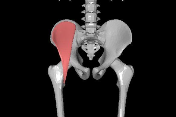 腸骨筋 正面